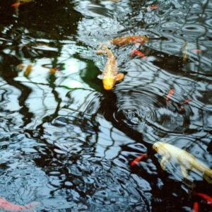 Jason Letkiewicz The Reflecting Pool
